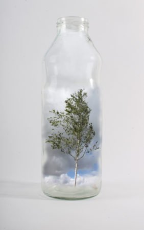 Amy Bell, 'Tree in a Bottle', digital photograph, 2018